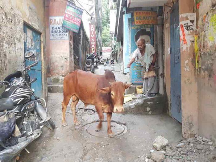 リシケシの通路には牛が・・・