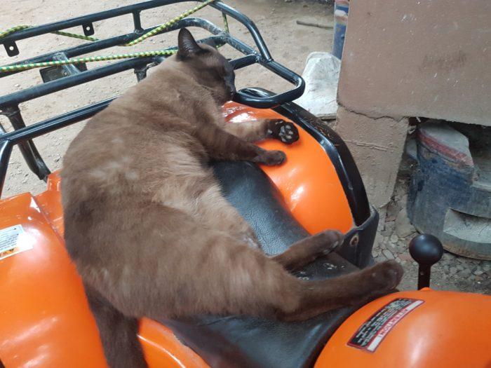 エレファントネイチャーパークの猫
