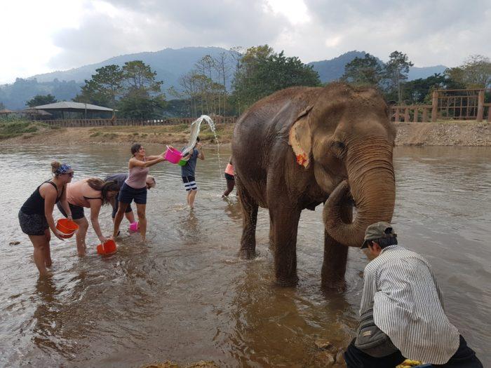 エレファントネイチャーパーク 象の水浴び