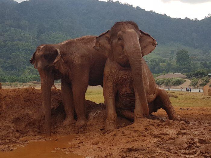 エレファントネイチャーパークの象