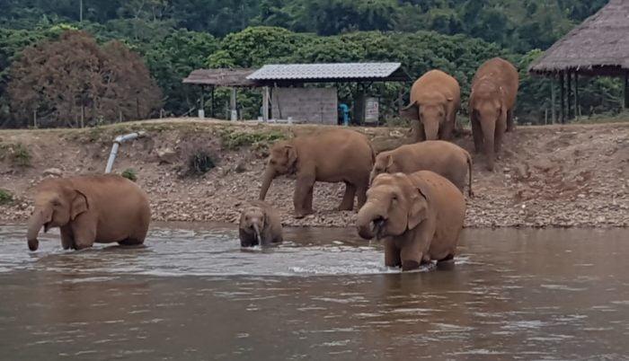 エレファントネイチャーパークの象達