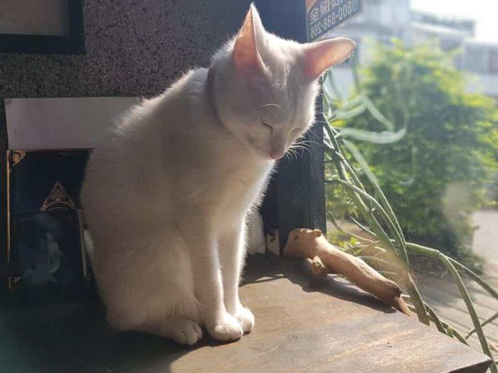 台中のおすすめ猫カフェ