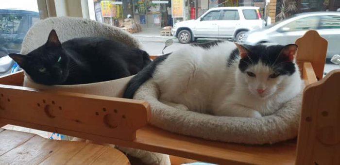 台南のかわいい猫カフェ2選