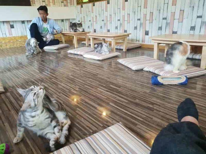 ヤンゴン唯一の猫カフェ!