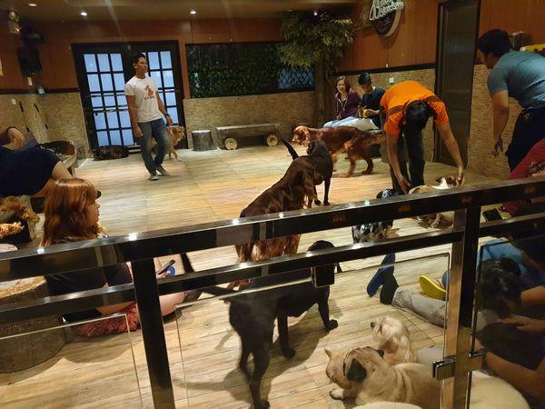 マニラ Barkin' Blends Dog Cafeは犬がたくさん