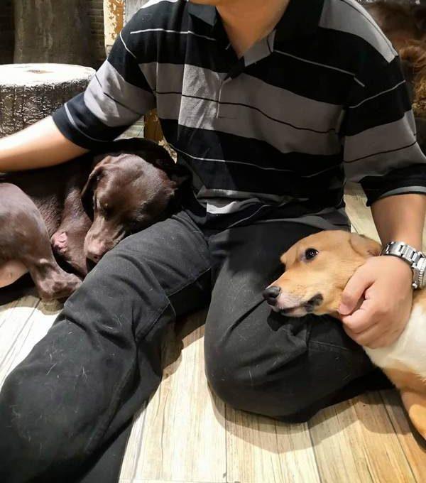 マニラ Barkin' Blends Dog Cafeで犬に囲まれる
