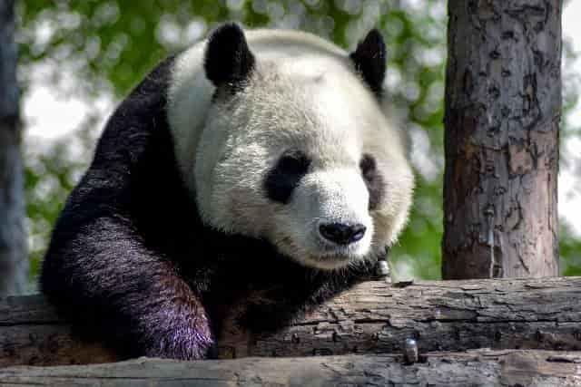 中国語の名詞 動物の名前